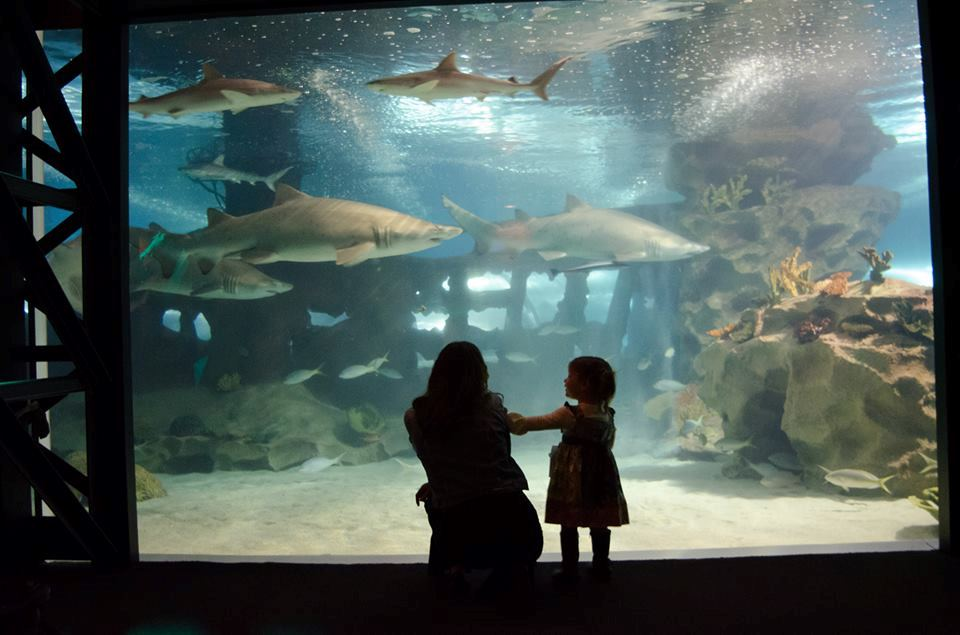 Greater Cleveland Aquarium - 6