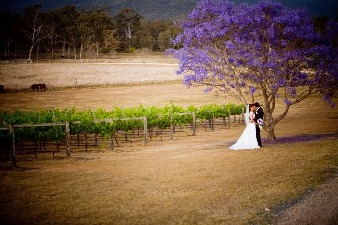 Albert River Wines - 1