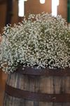 Shelly's Designs Florist - 3