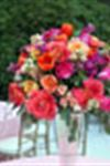 Abundance Acres Wedding Flowers - 2