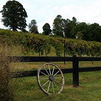 Cave Hill Vineyard, LLC - 6