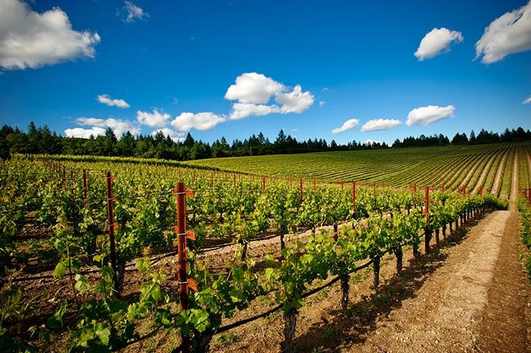 Heisen House Vineyards - 3