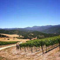 Holman Ranch Vineyards - 5