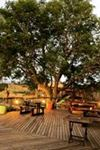 Amakhala Game Reserve - Hlosi Game Lodge - 4
