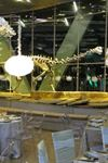 Perot Museum of Nature and Science - 3