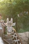 Dallas Zoo - 2