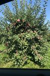 Pennings Orchard - 2