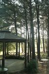 Chapel in the pines - 5