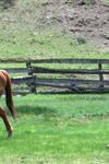 Idaho Guest Ranch - Lazy R Ranch - 7