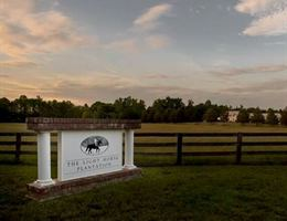 The Light Horse Plantation is a  World Class Wedding Venues Gold Member